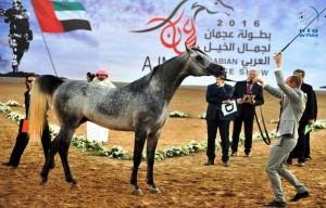 Ajman Ruler attends Arabian horse beauty contest