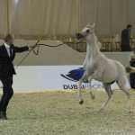 Dubai Int'l Horse Fair Marks 10th Anniversary