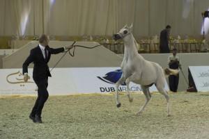 Dubai Int'l Horse Fair Marks 10th Anniversary